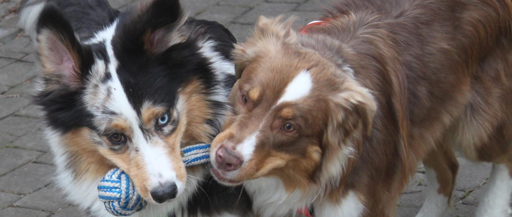 Harrasta koirasi kanssa Masalassa Kirkkonummella